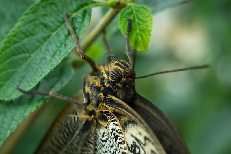 Butterfly2_K33P1098