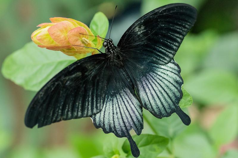 Butterfly17_K33P1137