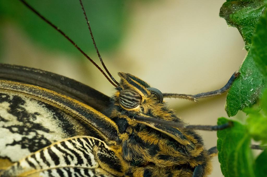Butterfly3_K33P1101