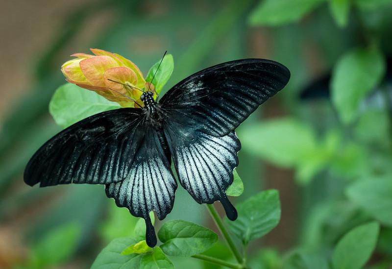 Butterfly16_K33P1128