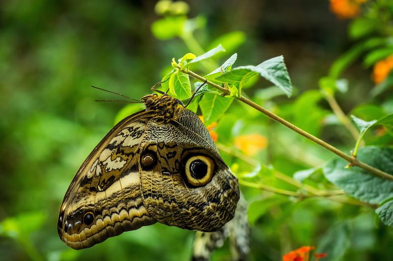 Butterfly15_K33P1124