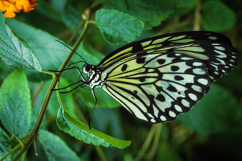 Butterfly1_K33P1092