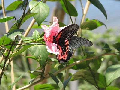 Butterfly farm on Grand Cayman