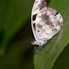 Butterfly Farm Stratford 18-06-11   014