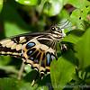 Butterfly Farm Stratford 18-06-11   067