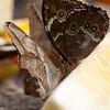 Butterfly Farm Stratford 18-06-11   006