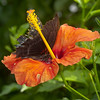 Butterfly Farm Stratford 18-06-11   072