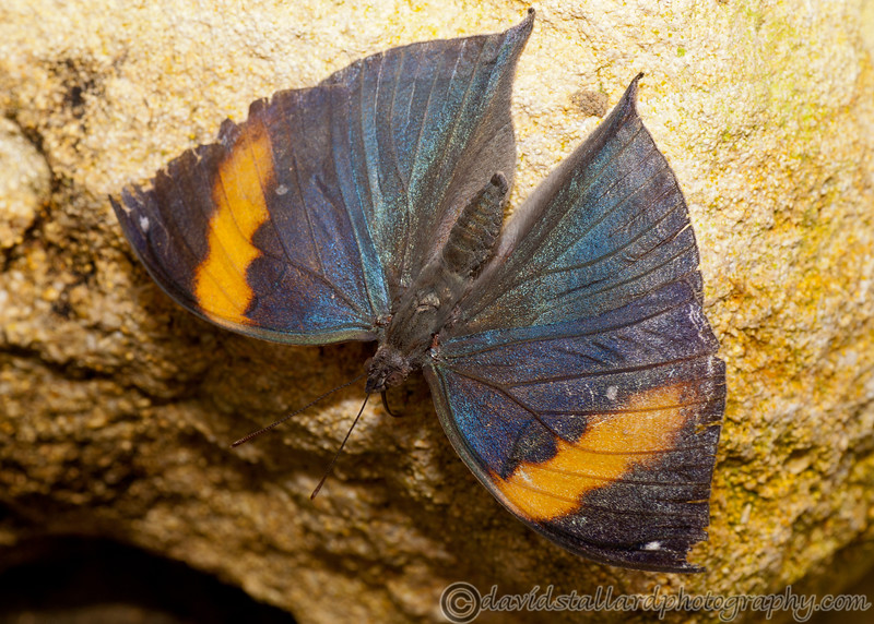 Butterfly Farm Stratford 18-06-11   069