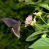 Butterfly Farm Stratford 18-06-11   064