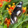Butterfly Farm Stratford 18-06-11   078