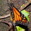 Butterfly Farm Stratford 18-06-11   019