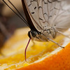 Butterfly Farm Stratford 18-06-11   005