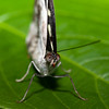 Butterfly Farm Stratford 18-06-11   015