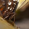 Butterfly Farm Stratford 18-06-11   012