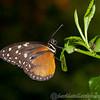 Butterfly Farm Stratford 18-06-11   020