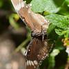 Butterfly Farm Stratford 18-06-11   061