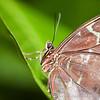 Butterfly Farm Stratford 18-06-11   008