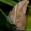 Butterfly Farm Stratford 18-06-11   011