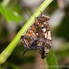 Butterfly Farm Stratford 18-06-11   017
