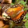 Butterfly Farm Stratford 18-06-11   062