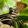 Butterfly Farm Stratford 18-06-11   068