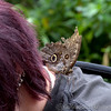 Butterfly Farm Stratford 18-06-11   004