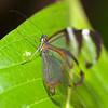 Butterfly Farm Stratford 18-06-11   009
