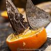 Butterfly Farm Stratford 18-06-11   001