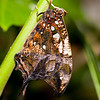 Butterfly Farm Stratford 18-06-11   016
