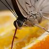Butterfly Farm Stratford 18-06-11   003