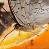 Butterfly Farm Stratford 18-06-11   002