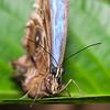 Butterfly Farm Stratford 18-06-11   013