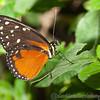 Butterfly Farm Stratford 18-06-11   063
