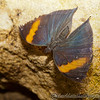 Butterfly Farm Stratford 18-06-11   070