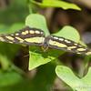 Stratford Butterfly Farm 21-04-12  080