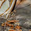 Stratford Butterfly Farm 21-04-12  004