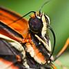 Stratford Butterfly Farm 21-04-12  020