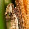 Stratford Butterfly Farm 21-04-12  065