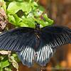 Stratford Butterfly Farm 21-04-12  016