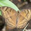 Stratford Butterfly Farm 21-04-12  115