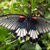 Stratford Butterfly Farm 21-04-12  017