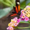 Stratford Butterfly Farm 21-04-12  008
