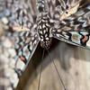 Stratford Butterfly Farm 21-04-12  012