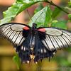Stratford Butterfly Farm 21-04-12  009
