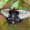 Stratford Butterfly Farm 21-04-12  010