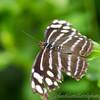 Stratford Butterfly Farm 21-04-12  104