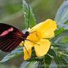 Stratford Butterfly Farm 21-04-12  006