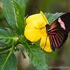 Stratford Butterfly Farm 21-04-12  005