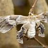 Stratford Butterfly Farm 21-04-12  079