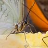 Stratford Butterfly Farm 21-04-12  007